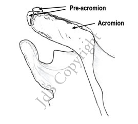 Os-acromiale